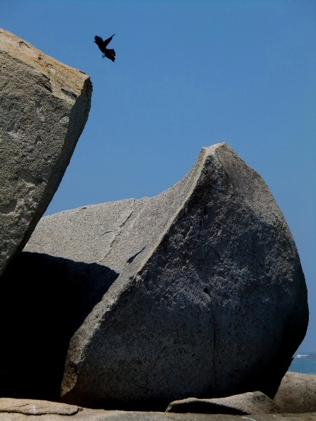A bird flying from one rock to the other